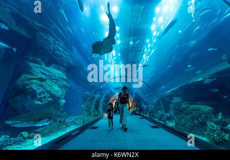 Dubai Aquarium and Underwater Zoo, in the Dubai Mall, Dubai, United Arab Emirates - Stock Photo