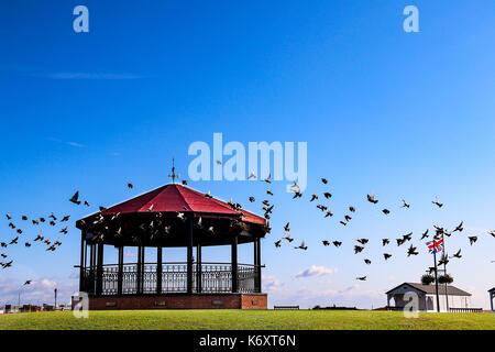 Flock of Birds surround Walmer Memorial Bandstand - Stock Photo