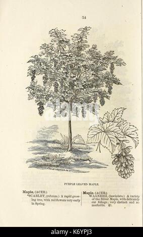 Ellwanger and Barry's descriptive catalogue of ornamental trees and shrubs, roses, flowering plants, etc., etc., - Stock Photo