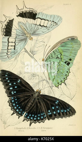 Foreign butterflies (Plate 17) (6046098090) - Stock Photo