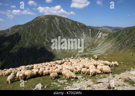 Flock of sheep in the Parang Mountains, Southern Carpathians, Romania - Stock Photo
