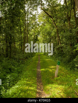 Am Wald, Langeoog.  Deutschland.  Germany.  A view looking down a footpath into the dense woodland.  Dappled sunlight - Stock Photo