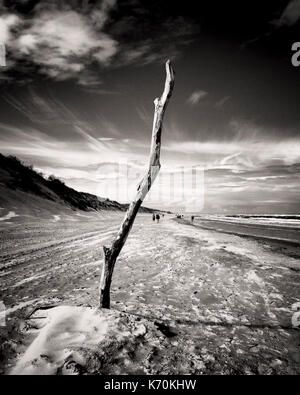 Langeoog, Germany. A piece of driftwood placed in the sand on beach to stand-up tall and prominently against the - Stock Photo