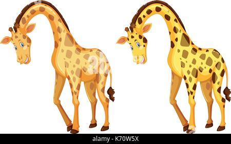 Two wild giraffes on white background illustration - Stock Photo