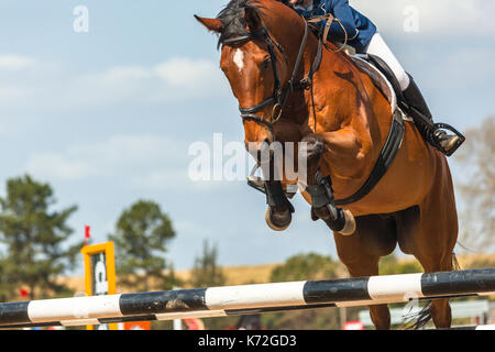 Show jumping horse rider  unidentified closeup jump action over poles. - Stock Photo