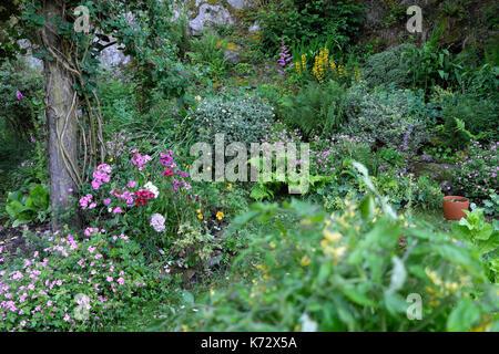 Perennial rockery garden in bloom with sweet williams, honeysuckle climbing rose, pink geranium in border July in - Stock Photo