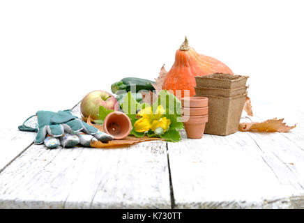 ... Flower And Pumpkin In Gardening Accessories On A Table   Stock Photo