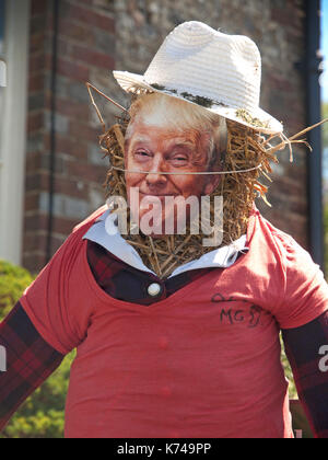 A scarecrow with a Trump mask in an English garden - Stock Photo