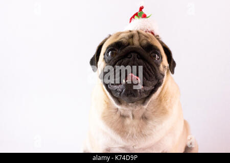 Dog pug with the christmas hat on the white ground. Isolated - Stock Photo