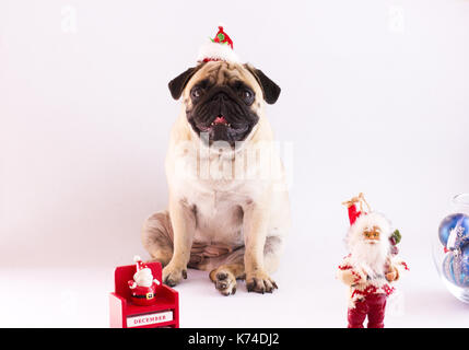 Pug sitting on a white background with the New Year calendar on December 31 and Santa Claus - Stock Photo