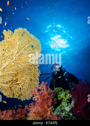 Girl Scuba DIver Looking at a Gorgonian Sea Fan - Stock Photo