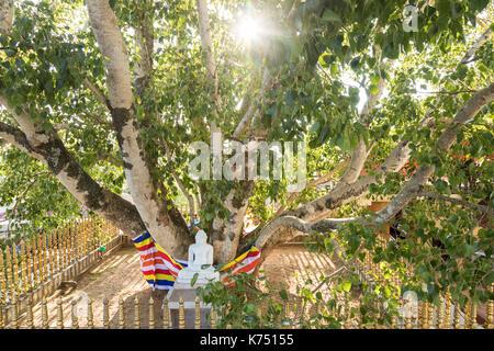 Buddha statue under a holy bodhi tree in Kandy, Sri Lanka - Stock Photo