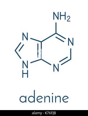 Adenine (A, Adenine) purine nucleobase molecule. Base present in DNA and RNA. Skeletal formula. - Stock Photo