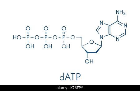 Deoxyadenosine triphosphate (dATP) nucleotide molecule. DNA building block. Skeletal formula. - Stock Photo