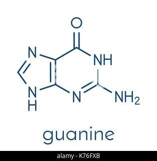 Guanine (G) purine nucleobase molecule. Base present in DNA and RNA. Skeletal formula. - Stock Photo