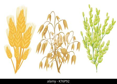 Cereals icons of grain plants. Vector wheat and rye ears, buckwheat seeds and oat or barley millet and rice sheaf. - Stock Photo