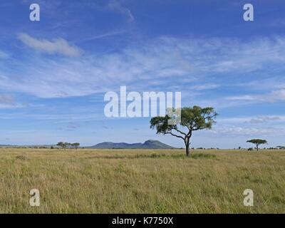 The vast open plains of the Serengeti National Park, Tanzania - Stock Photo
