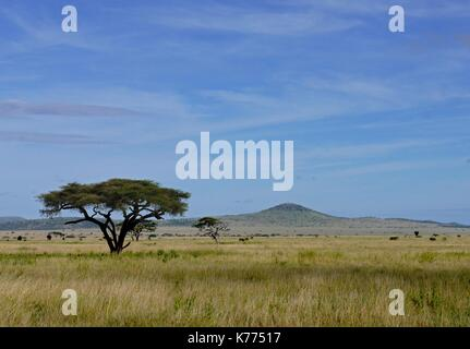 The vast open plains of the Serengeti National Park, Tanzania - Stock Photo