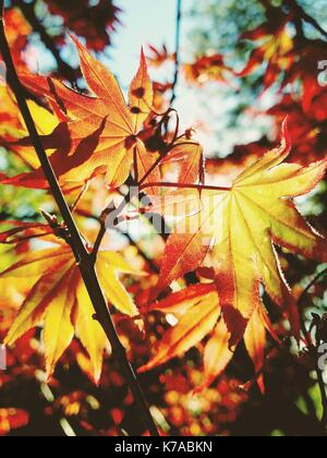 Golden Leaf - Stock Photo