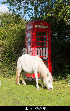 Minstead, New Forest, Hampshire, 15th September 2017. UK Weather. This is England. A white horse grazes green grass - Stock Photo