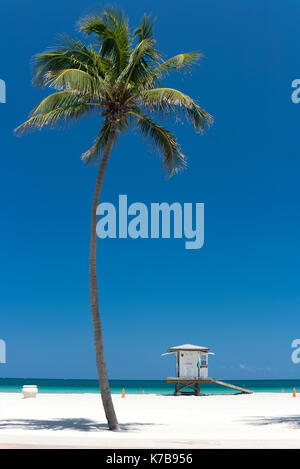 Single palm tree and lifeguard hut station in Hollywood Beach, Broward County, Florida, USA. - Stock Photo