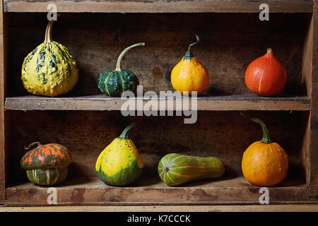 Assortment of different decorative and edible pumpkins on old wooden shelf. Still life with decorative gourd. - Stock Photo