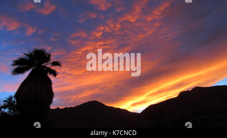 Single palm tree in sunset with pink and gold clouds over the mountains in Anza-Borrego Desert - Stock Photo
