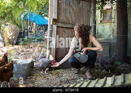 Woman feeding hens at poultry farm - Stock Photo