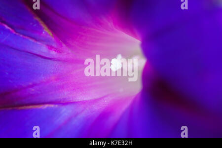 the light deep within, sensational macro shot of the core of a blue flower. - Stock Photo