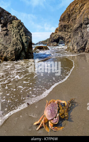 Crab on a Rocky Beach, Color Image - Stock Photo