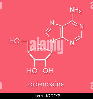 Adenosine (Ado) purine nucleoside molecule. Important component of ATP, ADP, cAMP and RNA. Also used as drug. Skeletal - Stock Photo