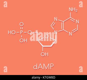 Deoxyadenosine monophosphate (dAMP) nucleotide molecule. DNA building block. Skeletal formula. - Stock Photo