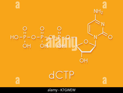 Deoxycytidine triphosphate (dCTP) nucleotide molecule. DNA building block. Skeletal formula. - Stock Photo