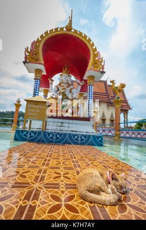 Cat sleeps on the tiles at Wat Plai Leam, a Buddhist temple on the island of Ko Samui, Thailand. - Stock Photo