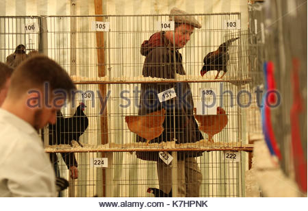 Eggleston Show, Eggleston, Barnard Castle, Co Durham, UK 16th September 2017. The traditional annual agricultural - Stock Photo