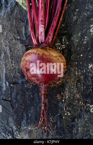 Freshly pulled up red beet root lying on wet slate from above. - Stock Photo
