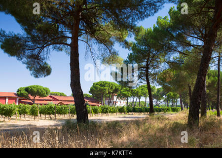 Finca Villacreces, Ribera del Duero wine production bodega by River Duero, Navarro, Spain - Stock Photo