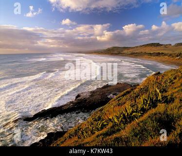 New Zealand. North Island. Auckland Region. Muriwai Beach. - Stock Photo