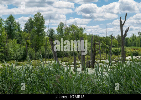 A pond beside the Soulange Canal. - Stock Photo