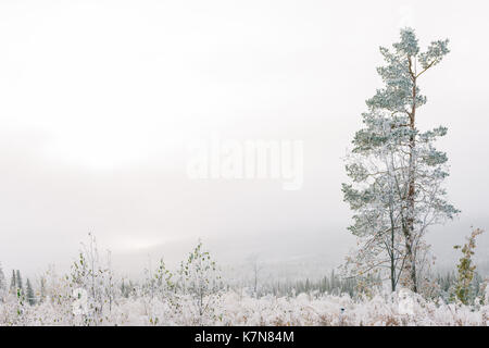 One tree in fog covered with frost - Stock Photo