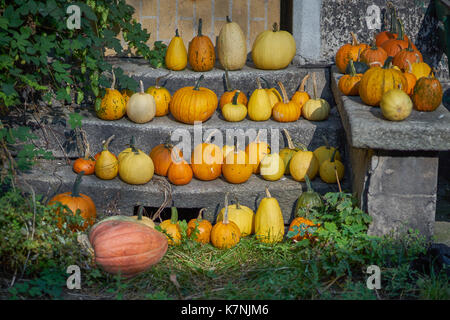 Many Pumpkins on the steps many multicolor pumpkins many multi-shaped pumpkins many colorful pumpkins - Stock Photo
