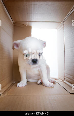 Sad puppy into cardboard box. Sadness, loneliness, socialization problems and shelter theme - Stock Photo