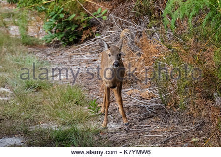 PICTURE OF FLORIDA KEYS - KEY WEST - KEY LARGO - BAHIA HONDA - KEY DEER - Stock Photo
