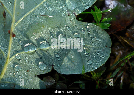 oak leaf  lying on a meadow with morning dew - Stock Photo