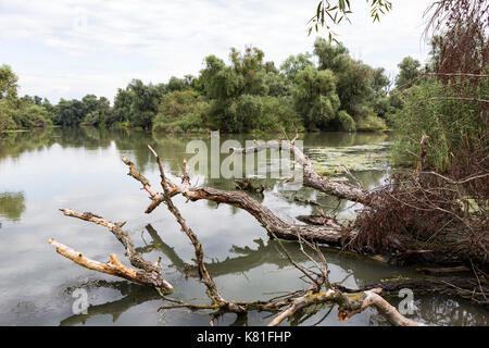 Danube Delta - Stock Photo