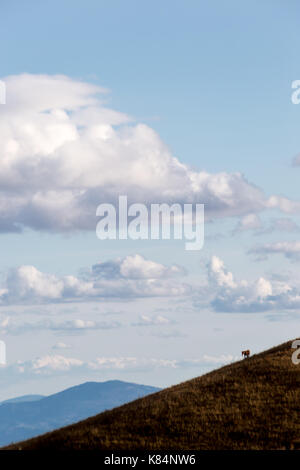 A tiny horse figure on the side of a mountain, beneath a deep blue sky with white clouds - Stock Photo