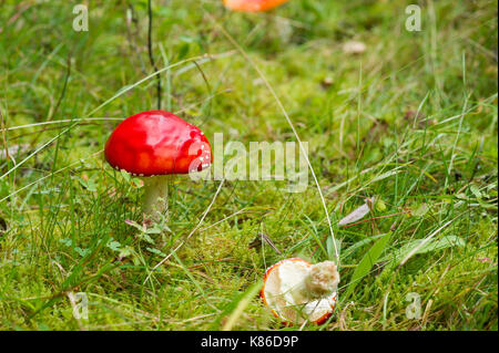 Mushroom in Swedish forest. - Stock Photo