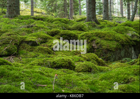 Swedish forest and mossy stones. - Stock Photo