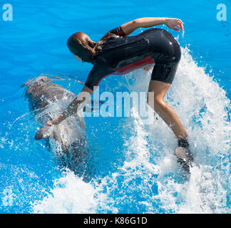 Show with dolphins. Woman standing on a dolphin. - Stock Photo