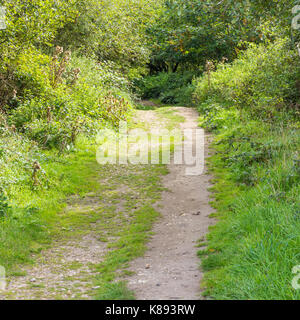 Pathway leading into wooded area on Turbary Common Nature Reserve, Dorset, UK - Stock Photo